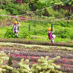 Zipping over the tropical plantation gardens