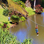 Soaring high over tropical gardens of the Maui Tropical Plantation